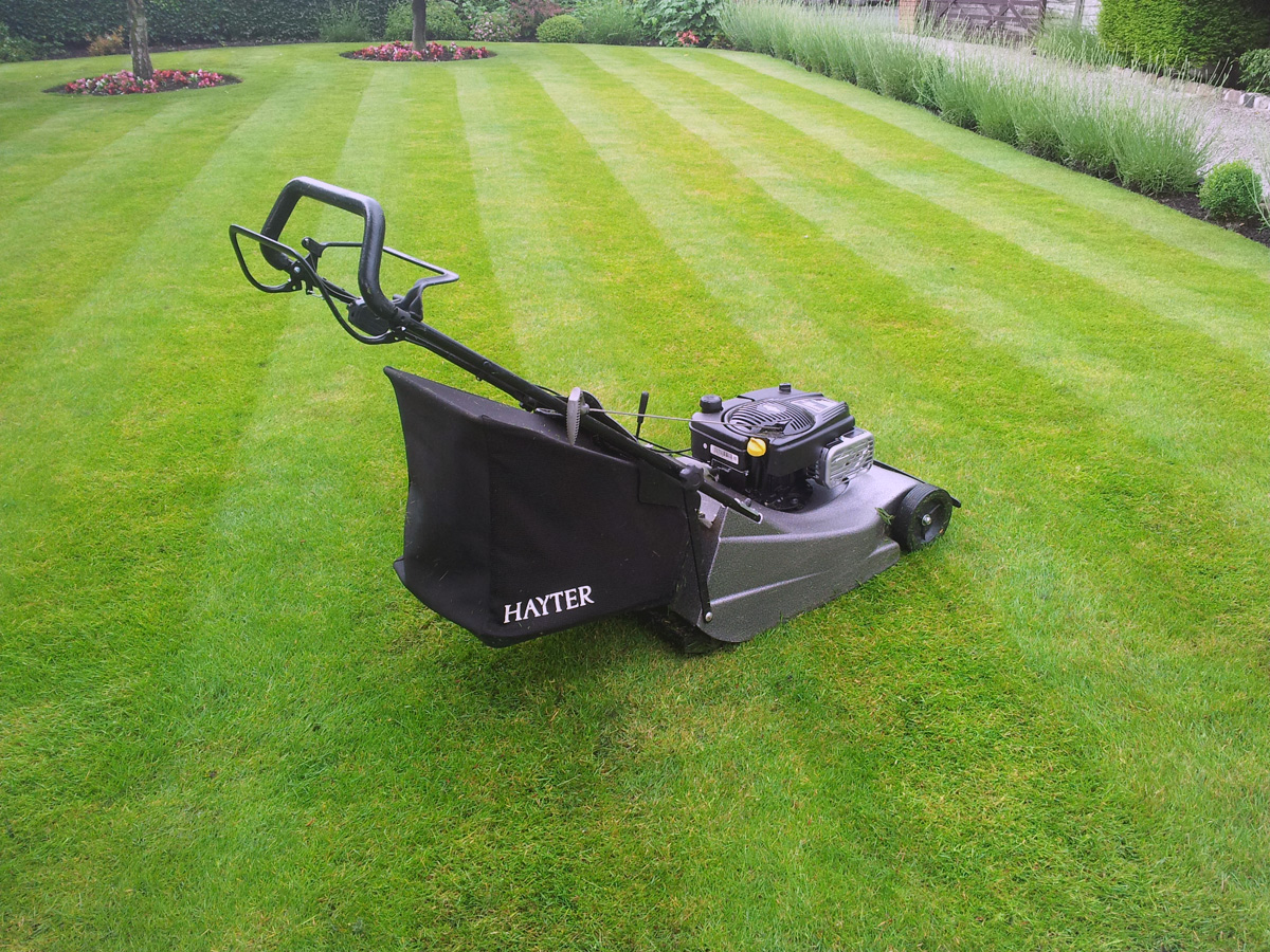 Hayter Harrier Pro 566 Lawnmower Image